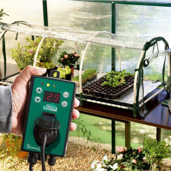 Jumbo propagator Biogreen